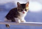 Petit chat qui découvre le monde