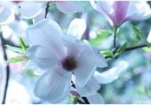 Fleur-de-printemps