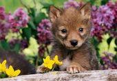 Bébé dans les fleurs