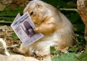 Marmotte - humour