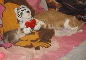 Tini et Wabzi lmes bébés a moi