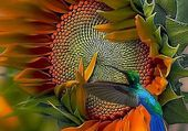 oiseau mouche