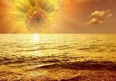 Joli tournesol sur fond de mer