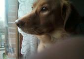 Rox à la fenêtre