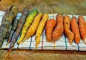 Les belles carottes