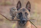Amitié animale