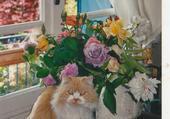 Laura et le bouquet de fleurs