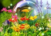 Fleurs et bulle