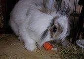 Puzzle Choupinou mange carotte