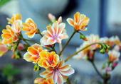 jolie floraison