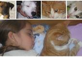 moi et mes animaux