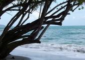 un arbre sur la plage