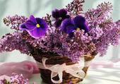 Panier de lilas et pensées