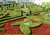 jardin de saumure