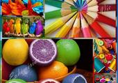 Puzzle ronde des couleurs