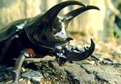 Dark Vador... scarabée