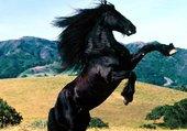 Un cheval sauvage