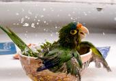 Envie d'un bain