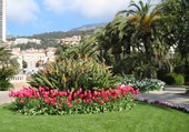 Quelque fleurs à Monaco