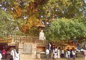 Puzzle Temple à Ceylan