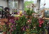 présentation d'orchidées