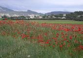 Puzzle Joli 1er mai en Haute Provence