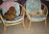 Rouky et Chipie