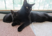 Chat male et sa petite