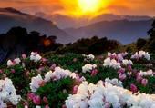 fleurs soleil couchant
