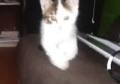mon chat gaia