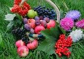 Panier de fruits et de fleurs
