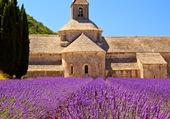 Eglise des lavandes