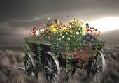 Champ de fleurs au désert