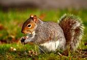 Squirriel