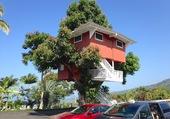 Maison perchée sur un arbre