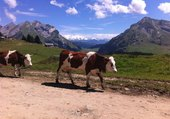 Puzzle alpages en Hte Savoie