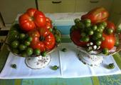 Tomates anciennes .