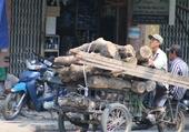 Transport Vietnamien.1