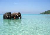Eléphants, bain de mer