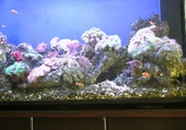 Puzzle aquarium privé