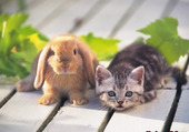 lapin et chat