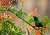 Oiseau dans le flamboyant