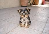 Ma petite chienne