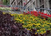 Décoration florale à Liège