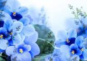 bleu magnifique