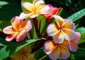 fleurs de jardin