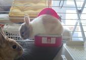 bebe lapin dans une gamelle et sa mere