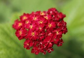 Joli bouquet rouge