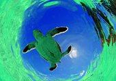 Puzzle la nage des tortues