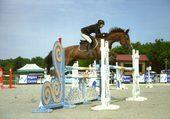 Puzzle Jump Horse